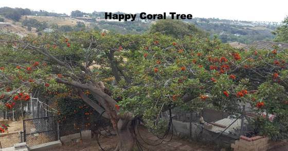 Happy Coral Tree