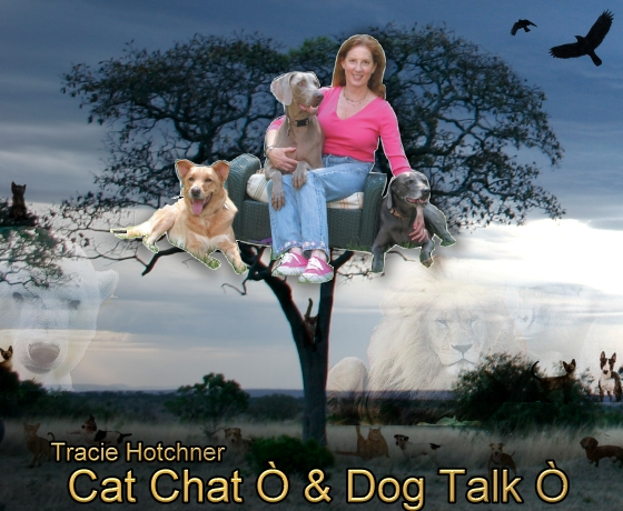 Cat Chat and Dog Talk with Tracie Hotchner, banner