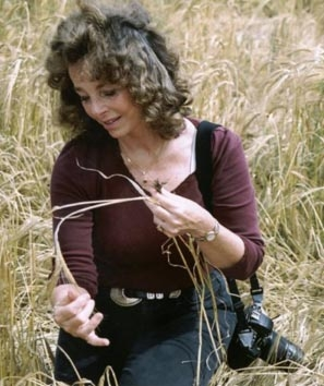 Linda Moulton Howe investigating the barley stem anomalies in the North Down, Wiltshire, England, crop formation on July 30, 2003. Photograph © 2003 by Robert Hulse.