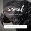 Magic Monday with Jessica Dewberry ~ Animal Communication