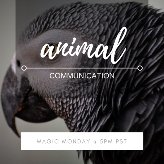 Magic Monday with Jessica Dewberry ~ Animal Communication