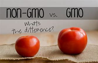 GMO vs non-GMO