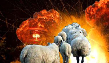 Sheep Moving toward fire